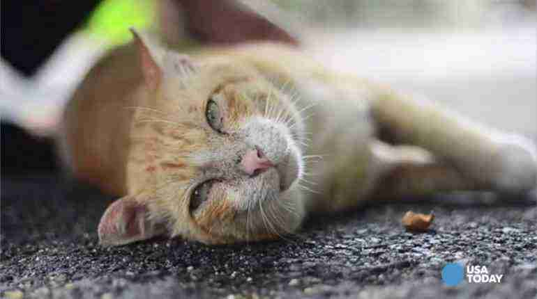 Cats do not cause mental health problems new research says