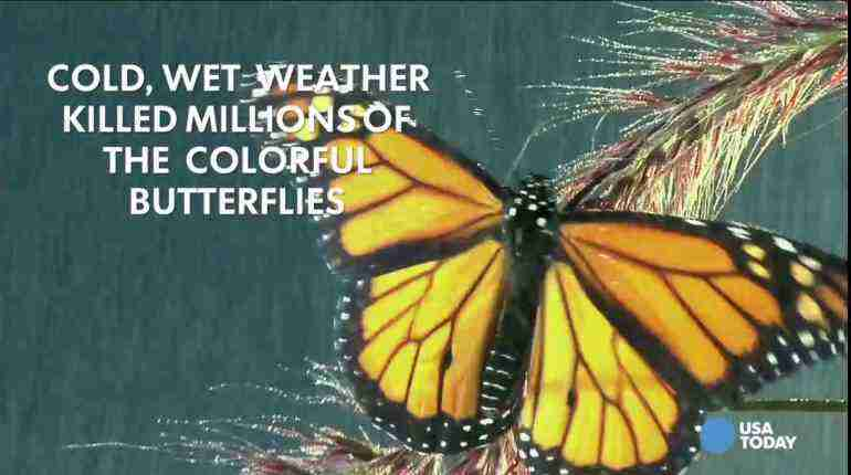 Spring will arrive with fewer butterflies