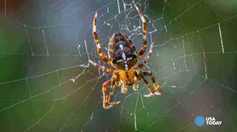 You won't believe how much spiders eat each year
